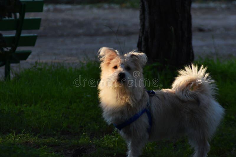 逗人喜爱的狗和滑稽的神色 免版税图库摄影