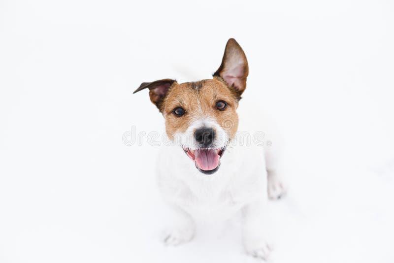 逗人喜爱的狗坐看与求知欲和注意的白雪所有者 库存照片