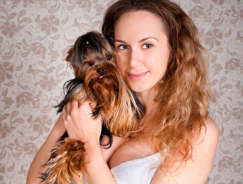 逗人喜爱的狗小的狗妇女约克 库存照片