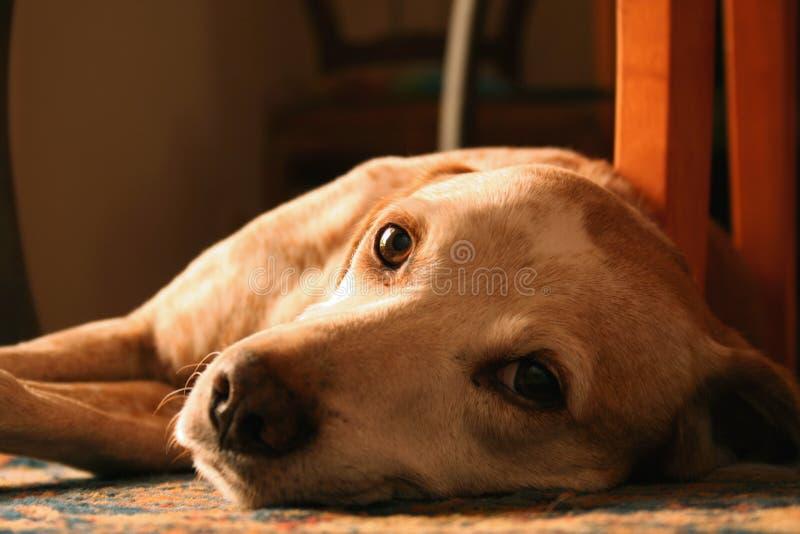 逗人喜爱的狗纵向  免版税库存图片