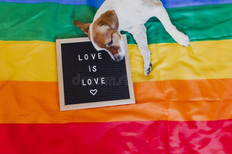 逗人喜爱的狗起重器罗素坐彩虹LGBT旗子在卧室 除充满消息爱以外的信件板是爱 自豪感月 免版税库存照片
