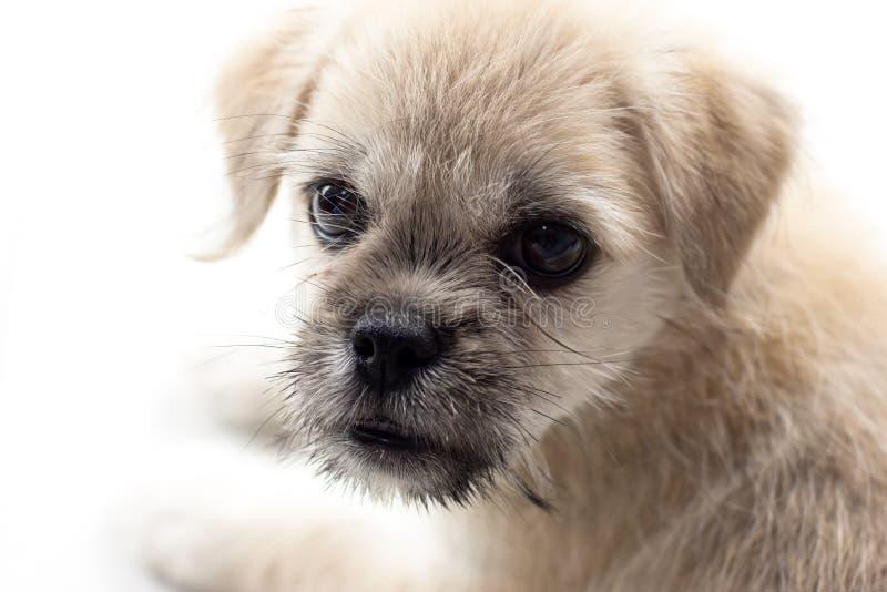 逗人喜爱的狗 库存照片