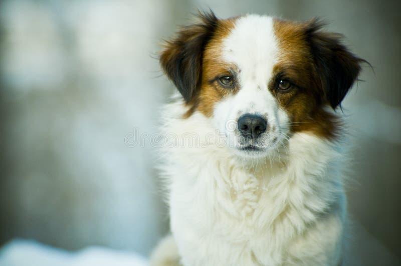 逗人喜爱的狗 库存图片