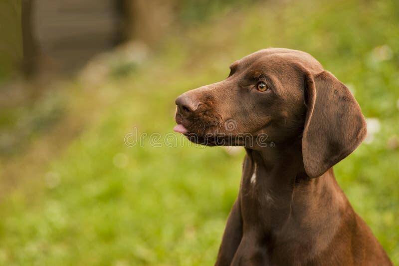 逗人喜爱的狗头  免版税库存照片