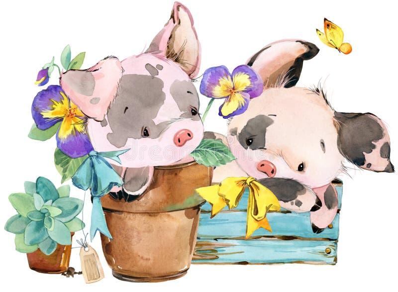 逗人喜爱的猪 动画片水彩动物例证. 问候, 查出.图片