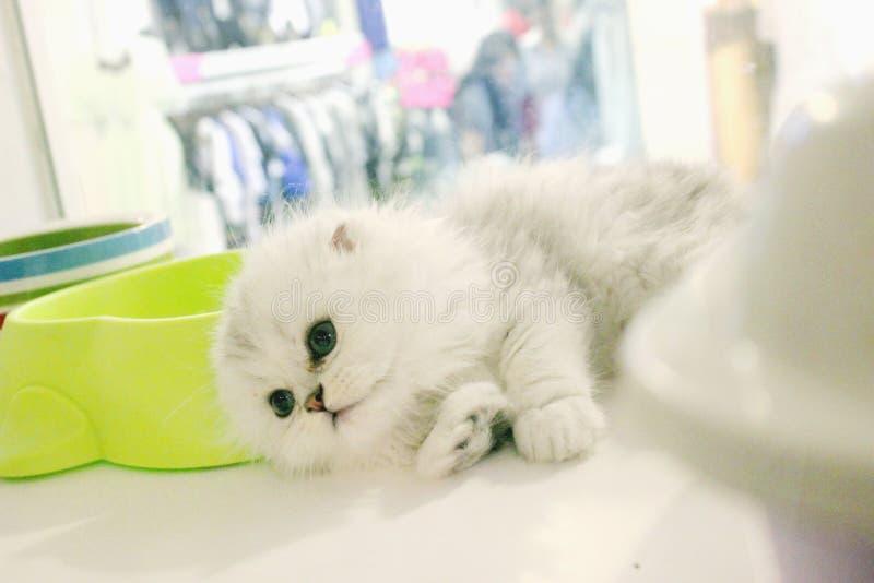 逗人喜爱的猫一点 库存照片