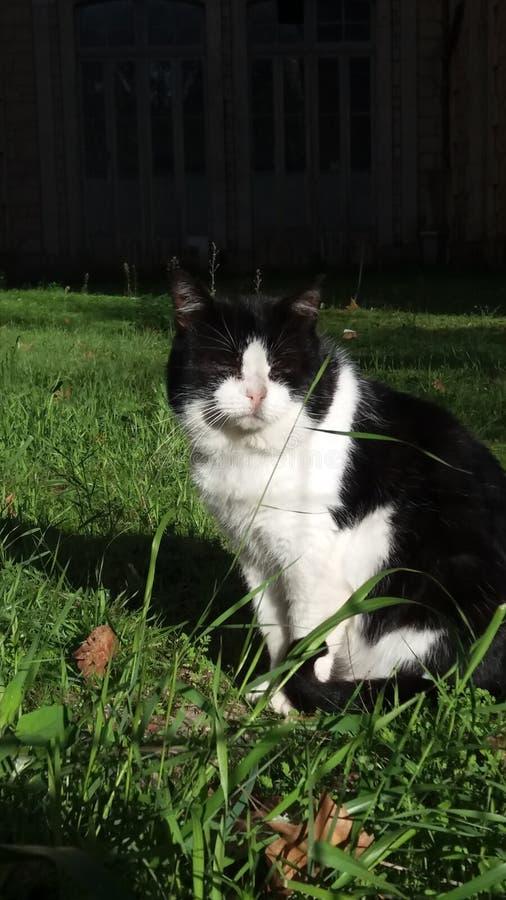 逗人喜爱的猫享有他的生活 免版税库存图片