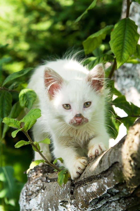 逗人喜爱的猫享有他的生活 库存照片