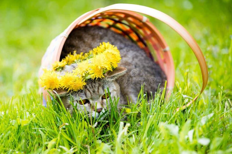 逗人喜爱的猫冠上与蒲公英花圈 免版税库存照片