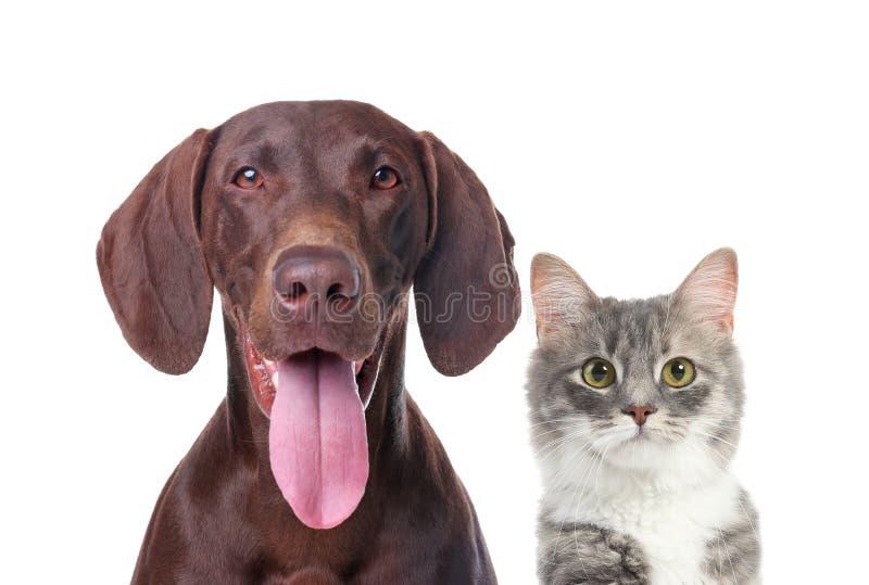 逗人喜爱的猫和狗画象在白色背景 免版税库存图片