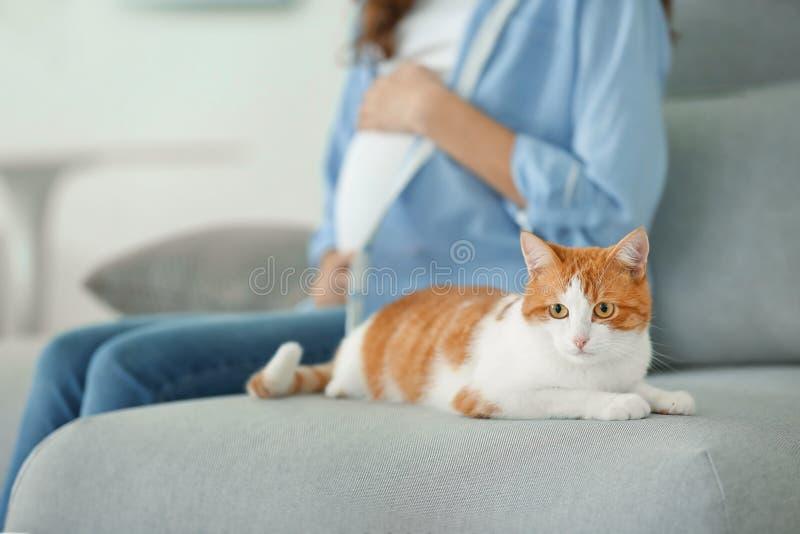 逗人喜爱的猫和被弄脏的孕妇 免版税库存图片