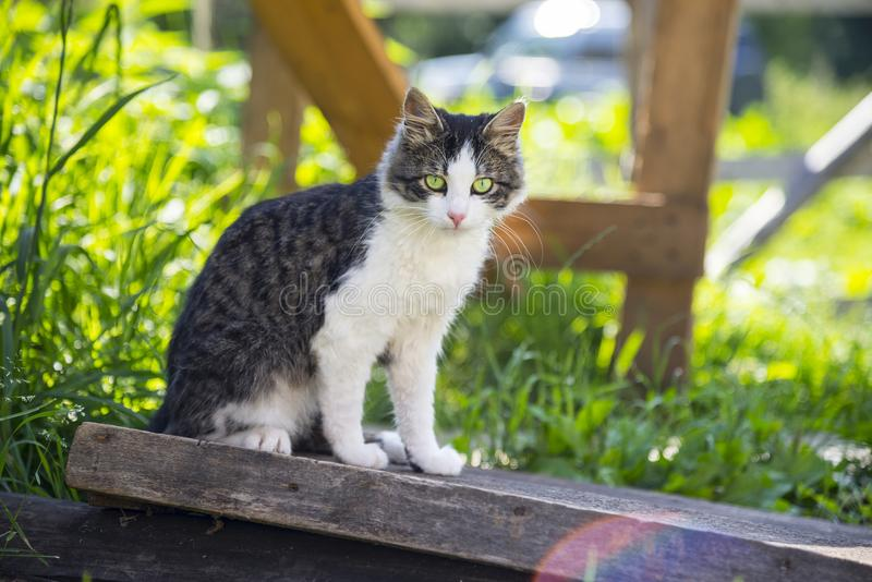 逗人喜爱的猫户外,夏天 免版税库存图片