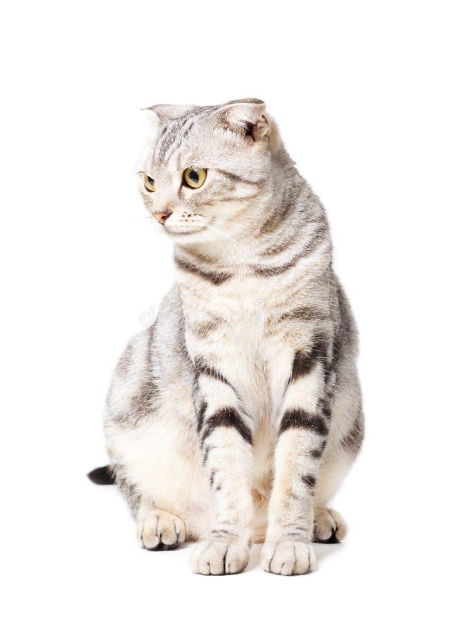 逗人喜爱的猫被隔绝在白色背景 ???? 图库摄影
