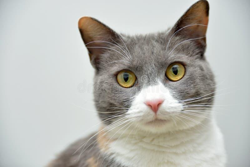 Download 逗人喜爱的猫画象 库存照片. 图片 包括有 哺乳动物, 白棉布, 房子, 似猫, 宠物, 全部赌注, 逗人喜爱 - 30329372
