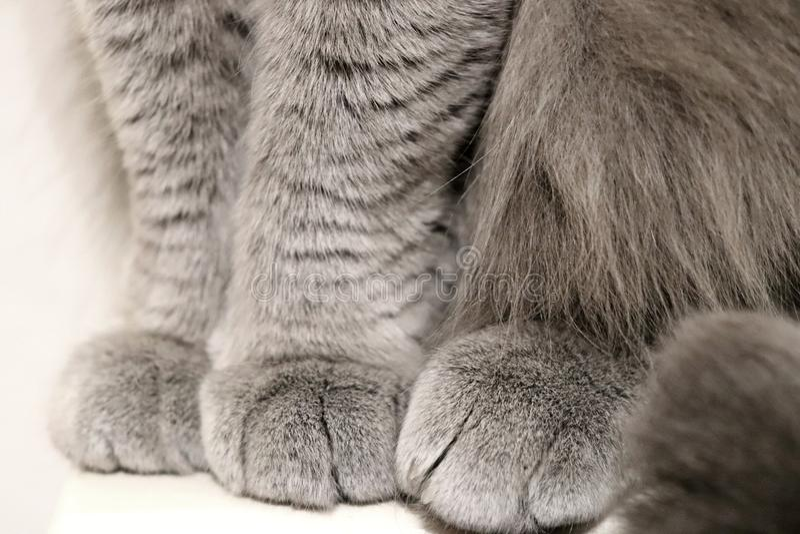 逗人喜爱的猫` s爪子 免版税库存图片