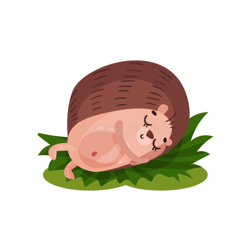 逗人喜爱的猬睡觉在草的,在白色背景的滑稽的动物漫画人物传染媒介例证 库存例证