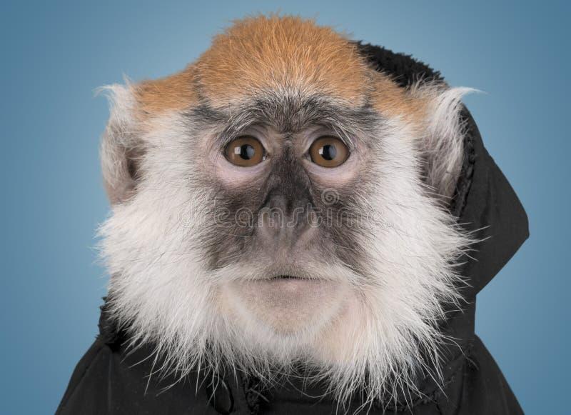 逗人喜爱的猴子动物被隔绝在背景 免版税库存图片