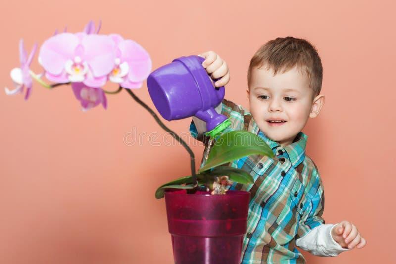 逗人喜爱的男孩给兰花喝水 花匠照料植物 库存图片