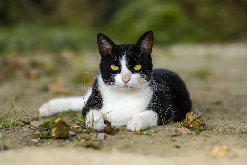 逗人喜爱的画象黄色被注视的猫 免版税库存照片