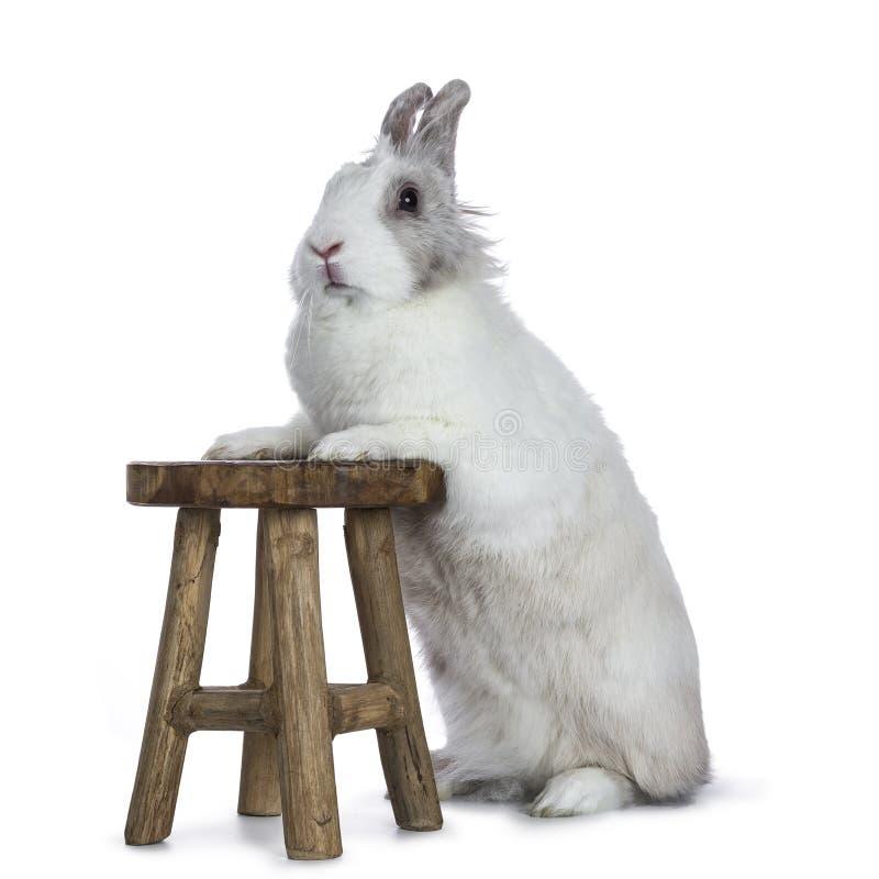 逗人喜爱的白色用灰色兔子 库存照片