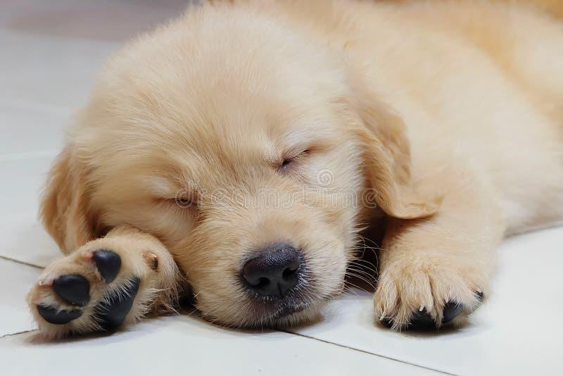 逗人喜爱的睡觉狗 免版税库存照片