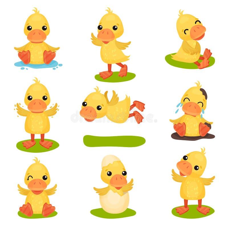 逗人喜爱的矮小的黄色鸭子字符集、小鸡鸭子用不同的姿势和情况导航例证在白色 库存例证