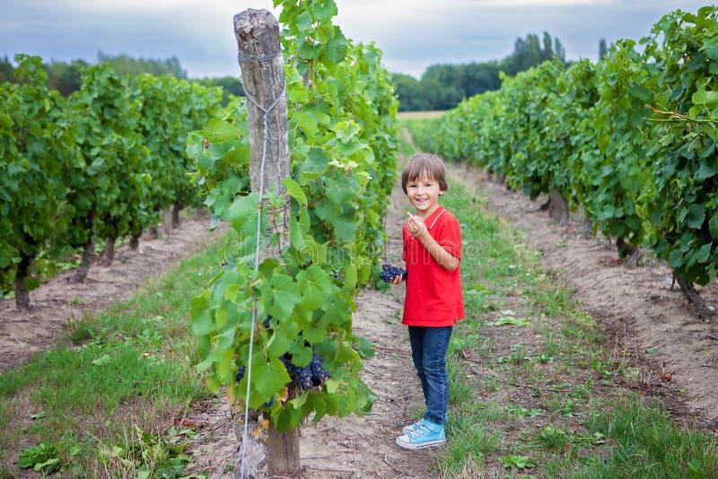 逗人喜爱的笑的男孩,跑在一个美好的夏天藤围场 库存照片
