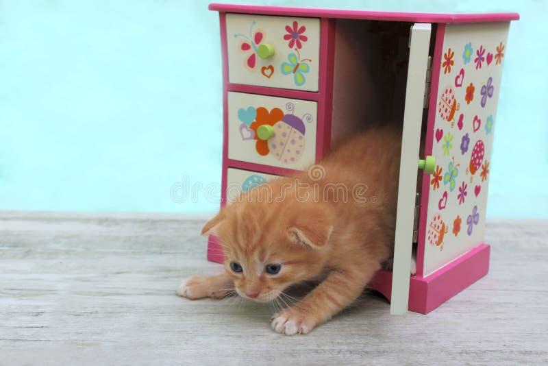 逗人喜爱的红色小的小猫播种的射击与蓝眼睛的 小猫,关闭 库存图片
