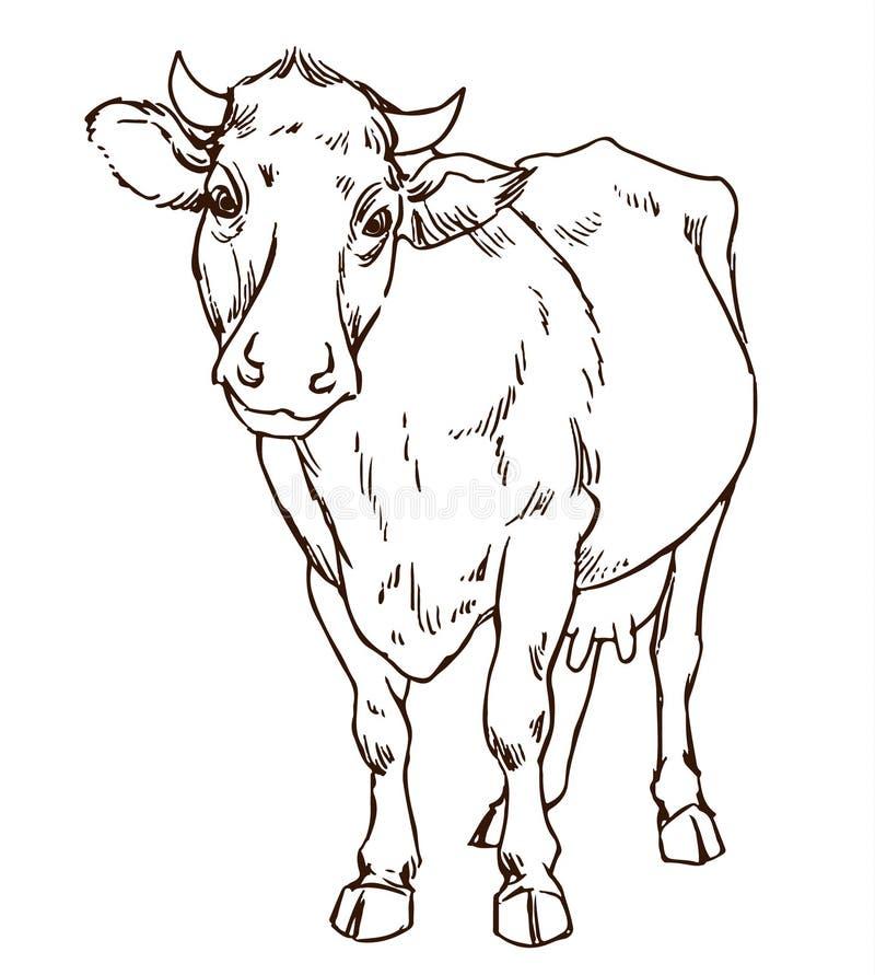 逗人喜爱的自然主义的母牛 向量例证