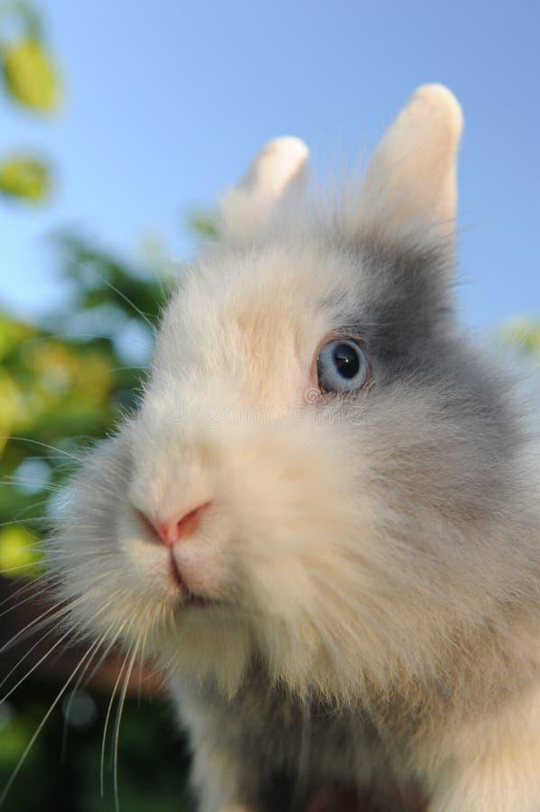 逗人喜爱的蓬松兔子特写镜头 免版税库存照片
