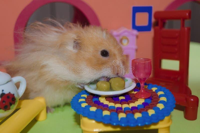 逗人喜爱的蓬松浅褐色的仓鼠吃三个豌豆 免版税图库摄影