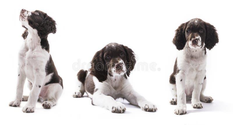 逗人喜爱的被隔绝的小狗 库存图片