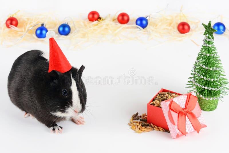 逗人喜爱的试验品画象在圣诞节背景的 试验品吃加入维生素的饲料 滑稽的新年背景 免版税库存照片
