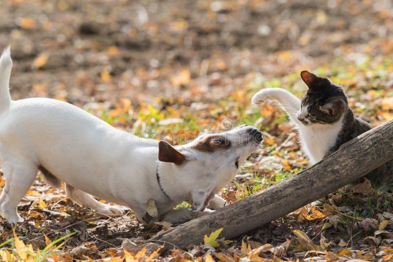 逗人喜爱的起重器罗素狗和小猫最好的朋友 库存图片