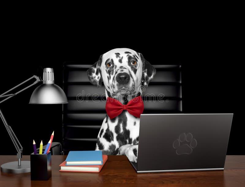 逗人喜爱的达尔马希亚狗经理完成在计算机上的一些工作 查出在黑色 库存照片