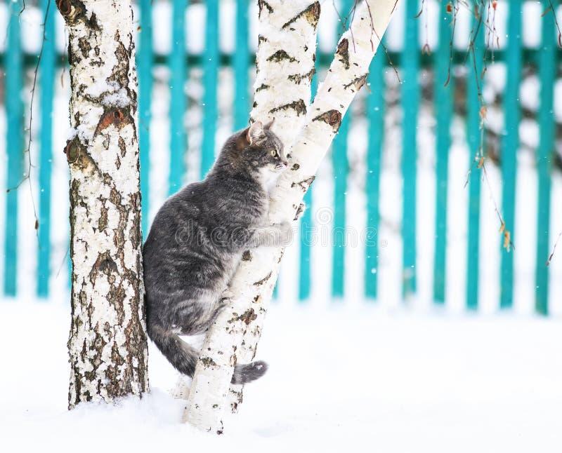 逗人喜爱的镶边猫坐拥抱树干的桦树在冬天雪公园 库存图片