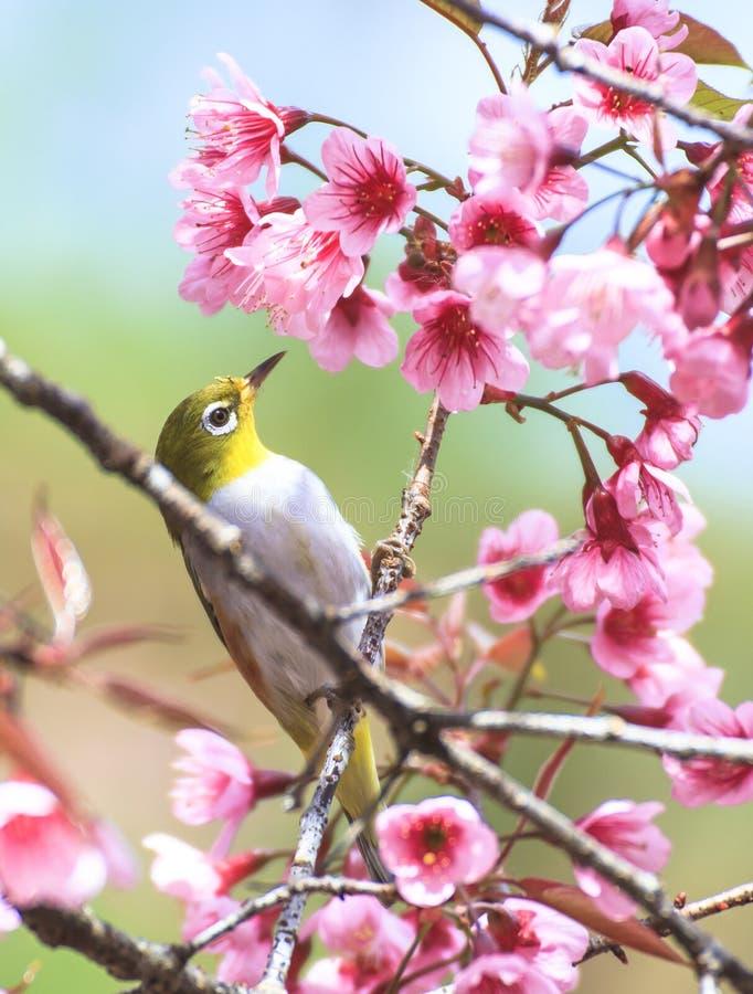 逗人喜爱的鸟坐开花树枝 库存图片