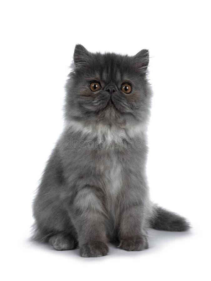 逗人喜爱的黑烟波斯猫小猫,隔绝在白色背景 免版税库存照片