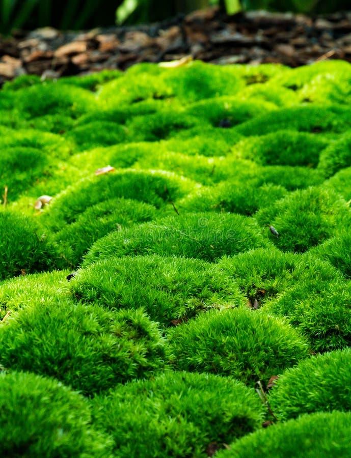 逗人喜爱的绿色青苔早晨 库存图片