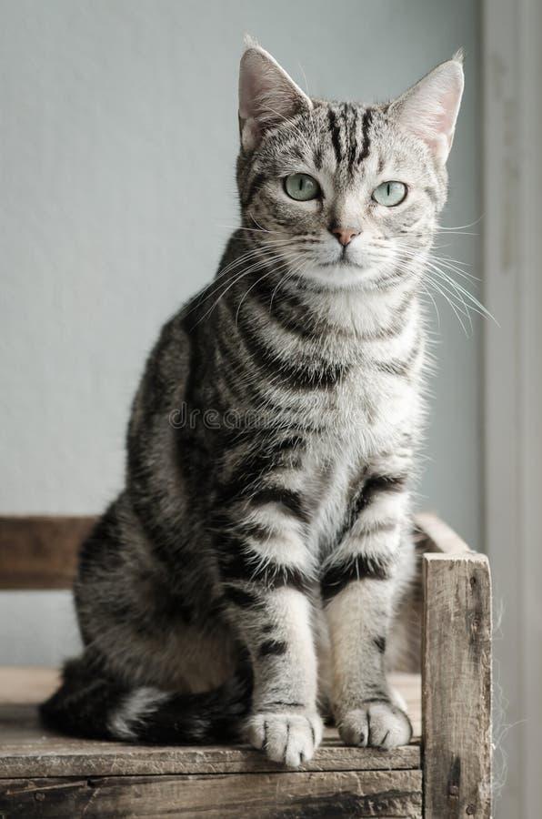 逗人喜爱虎斑猫开会和看 免版税库存图片