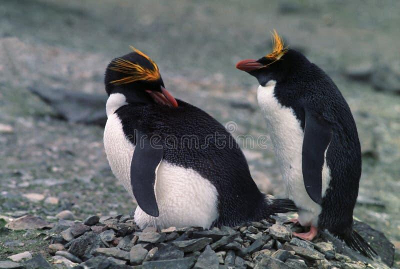 通心面企鹅