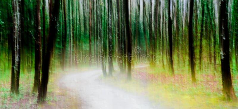 通过一个豪华的绿色森林摘要摇摄样式点燃有启发性道路 免版税图库摄影
