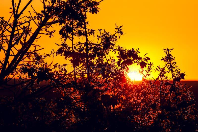 通过与叶子的一棵美丽的树看的日落在白云岩阵营在埃托沙国家公园 库存照片