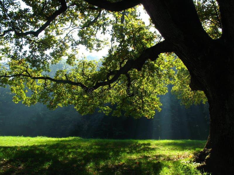 通过光束结构树通过的叶子 库存照片