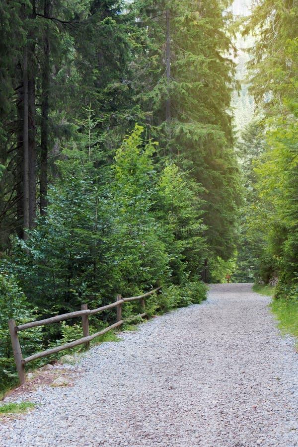 通过具球果森林铺石渣道路 免版税库存照片