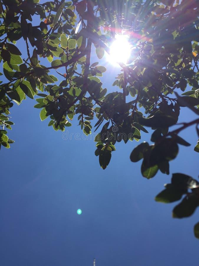 通过太阳 免版税图库摄影