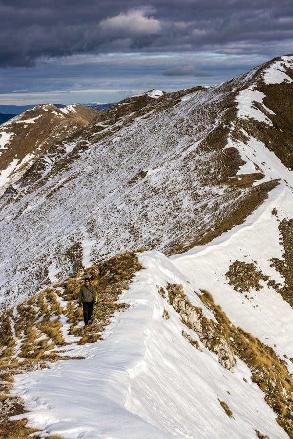 通过森林,冬天风景 免版税库存图片