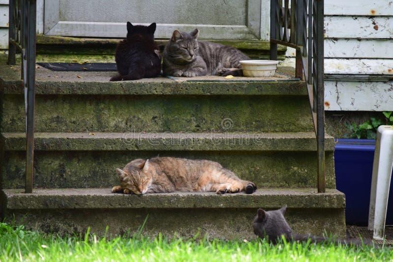 通过纽约的眼睛无家可归的猫的秀丽  库存照片