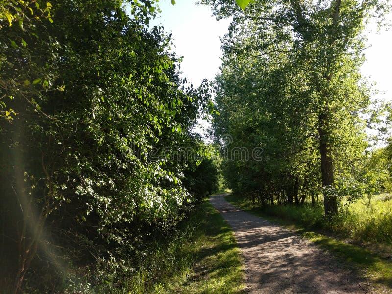 通过自然采取远足在您树木繁茂的公园 免版税库存图片