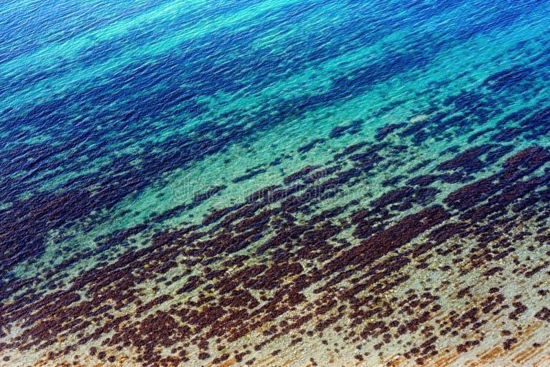通过透明表面背景被观看的海底 免版税库存照片